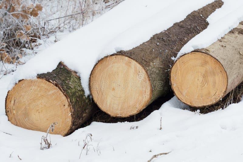 三个树干 库存图片