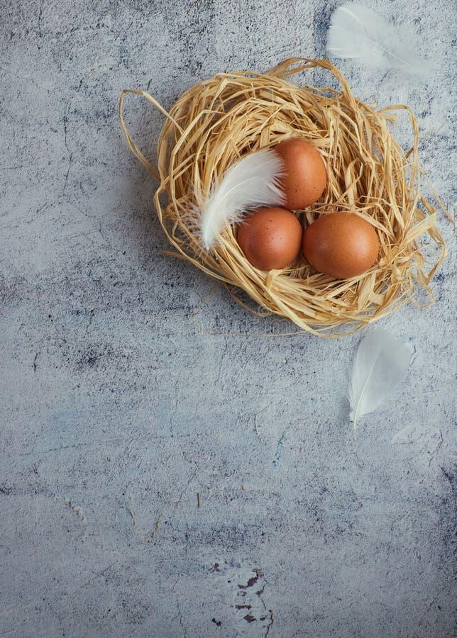 三个棕色鸡鸡蛋顶视图在秸杆巢的在灰色混凝土的 大量文本的室 欢乐拷贝的空间 库存照片