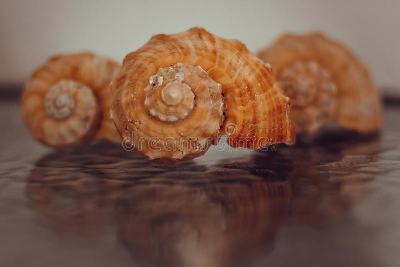 三个贝壳照片  免版税库存图片
