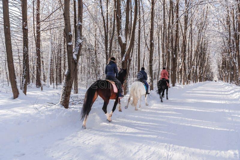 三个马和车手 在冬天forestHorseback骑马的好日子 免版税库存照片