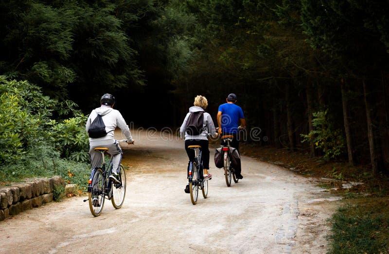 三个骑自行车者在公园 免版税库存照片