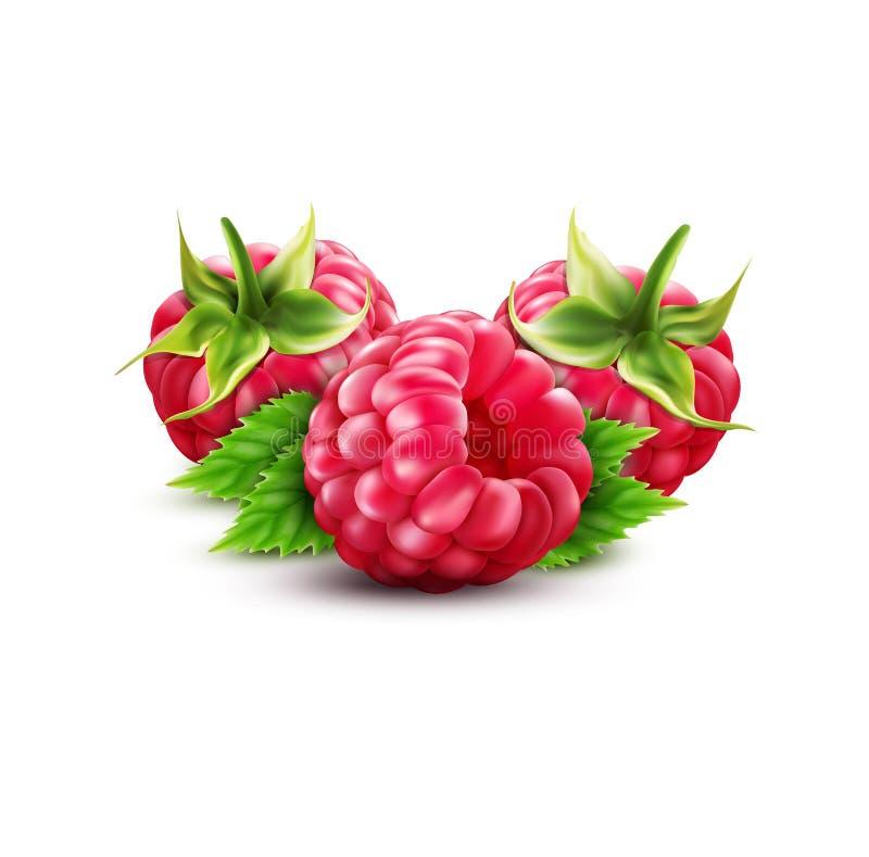 三传染媒介与在白色隔绝的绿色叶子的莓果莓 向量例证