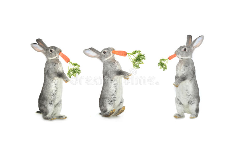 三兔子 免版税图库摄影