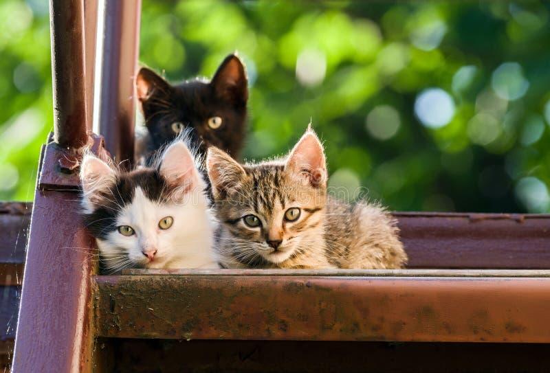 三只五颜六色的小猫调查在被弄脏的自然本底的照相机 免版税图库摄影