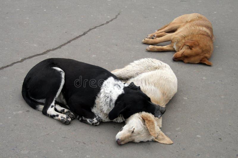 三只流浪狗睡眠 免版税库存图片