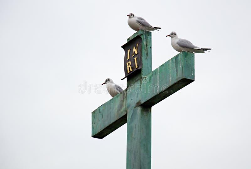 三只白色鸟坐十字架 图库摄影