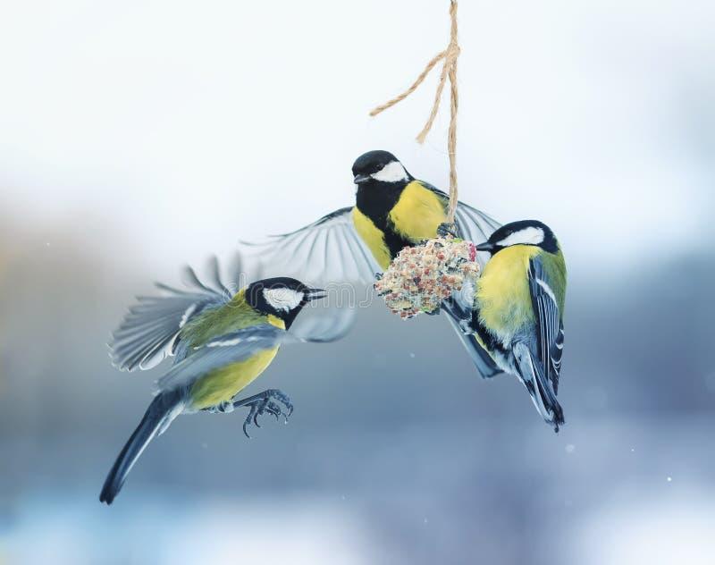 三只美丽的饥饿的小的鸟山雀在一个垂悬的饲槽飞行 库存图片