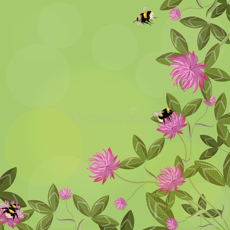 三叶草叶子、花和土蜂,在绿色背景的空的花卉框架壁角边界  传染媒介构成 库存例证