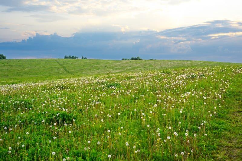 三叶草的领域 图库摄影