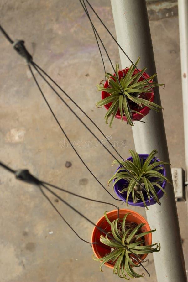 三在街道上的垂悬的种植的罐在曼谷 库存图片