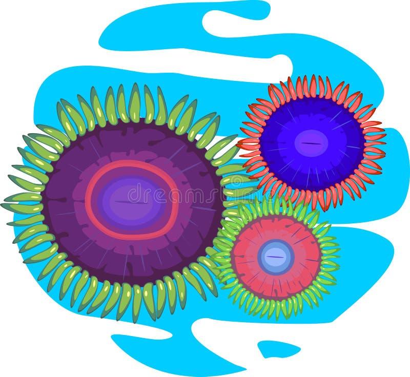 三多彩多姿的zoanthus 库存例证