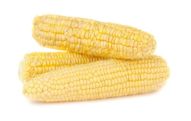 三成熟黄色玉米棒子 免版税库存图片