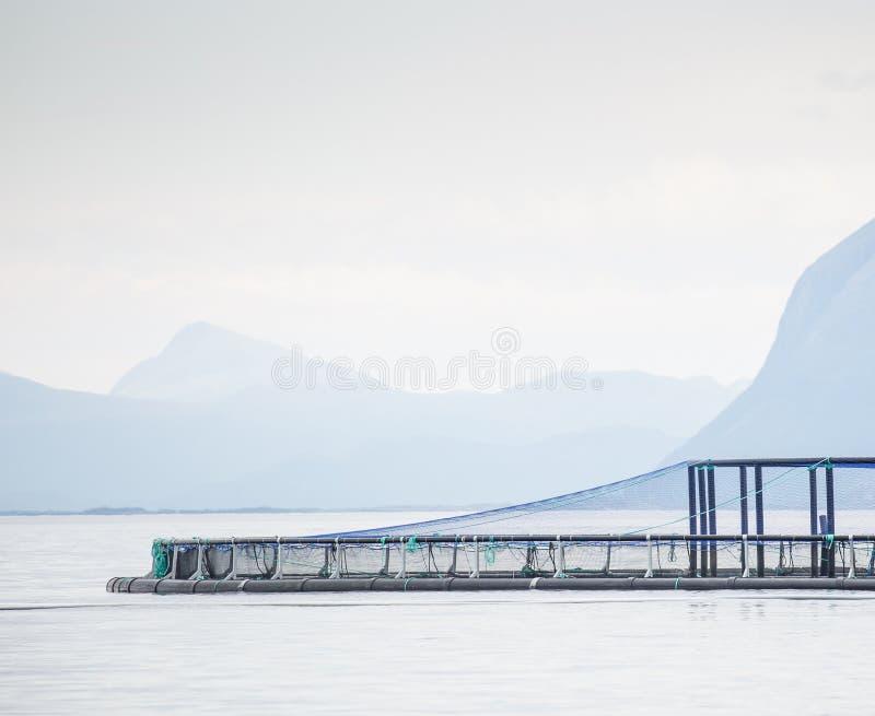 三文鱼农场 库存照片