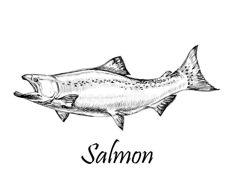 三文鱼鱼被隔绝的手拉的传染媒介例证 向量例证