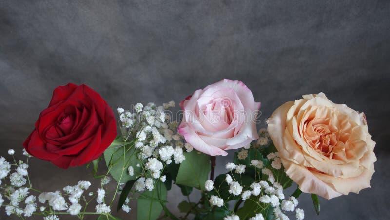 三朵玫瑰 红色,桃红色和黄色 库存照片