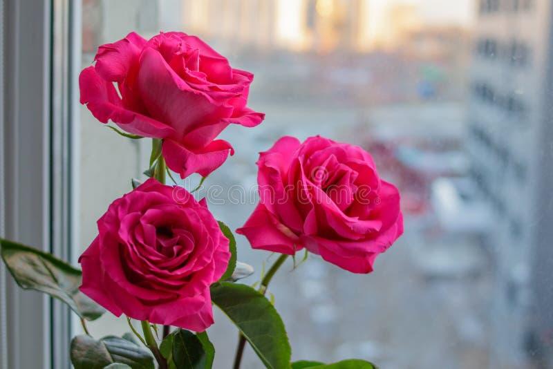 三朵精美桃红色玫瑰花束在窗口的 免版税库存图片