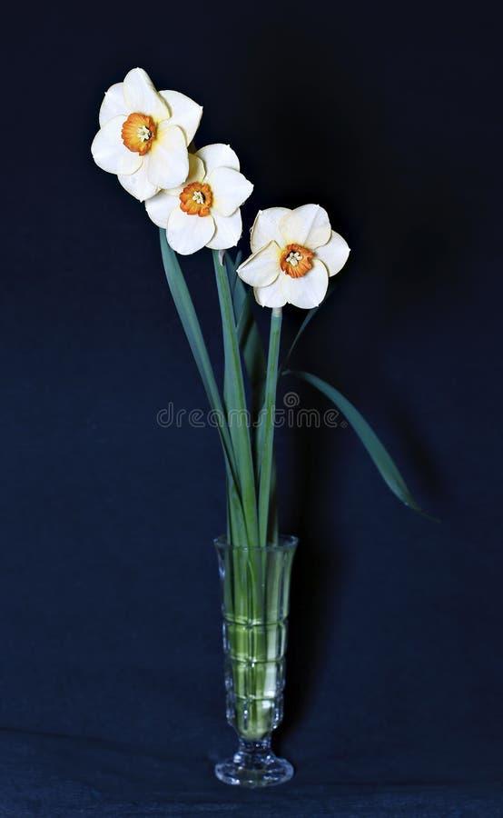 黄水仙三朵花花束  库存照片
