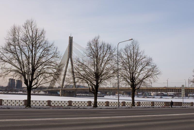 三棵树和Vansu桥梁在里加 库存图片