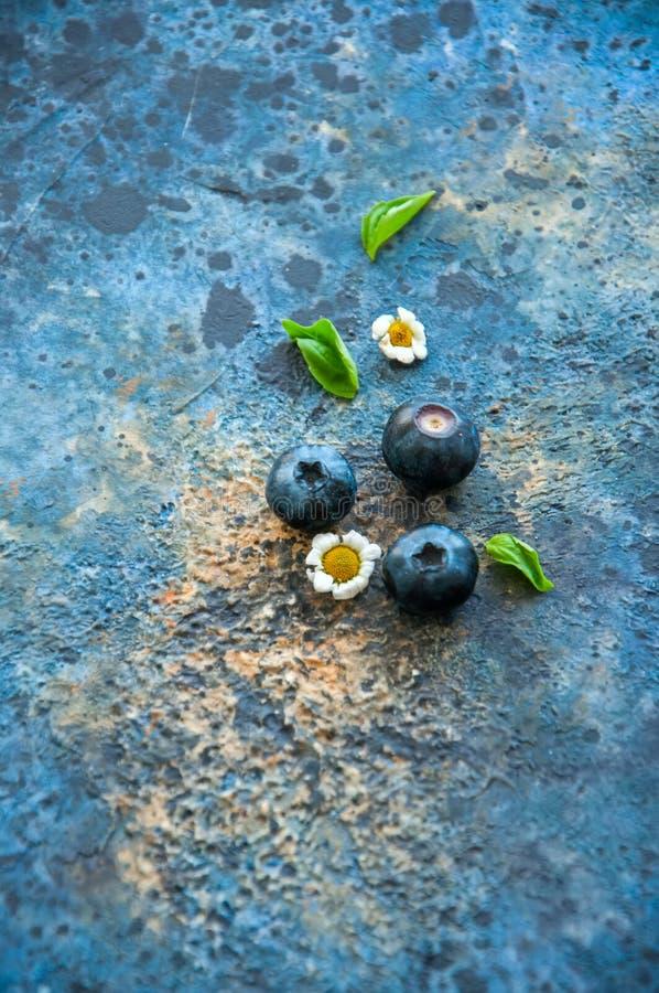 三棵蓝莓春黄菊蓬蒿在一蓝色生锈的textu离开 库存照片