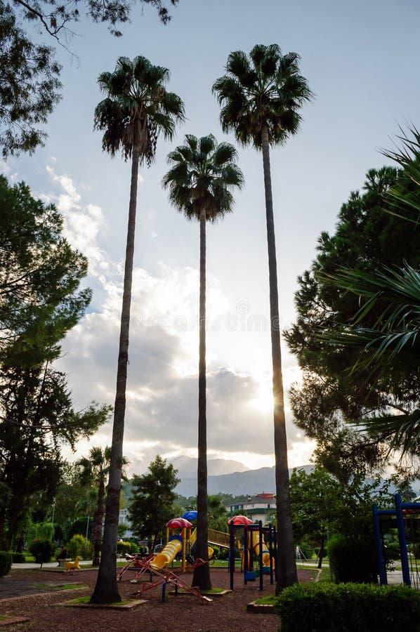 三棵高棕榈树在儿童公园 免版税图库摄影