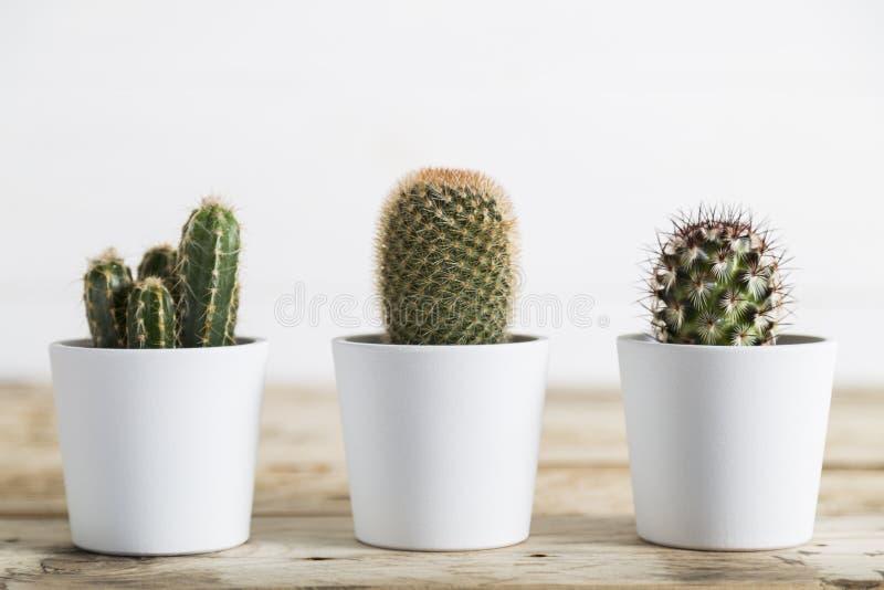 三棵仙人掌植物 图库摄影