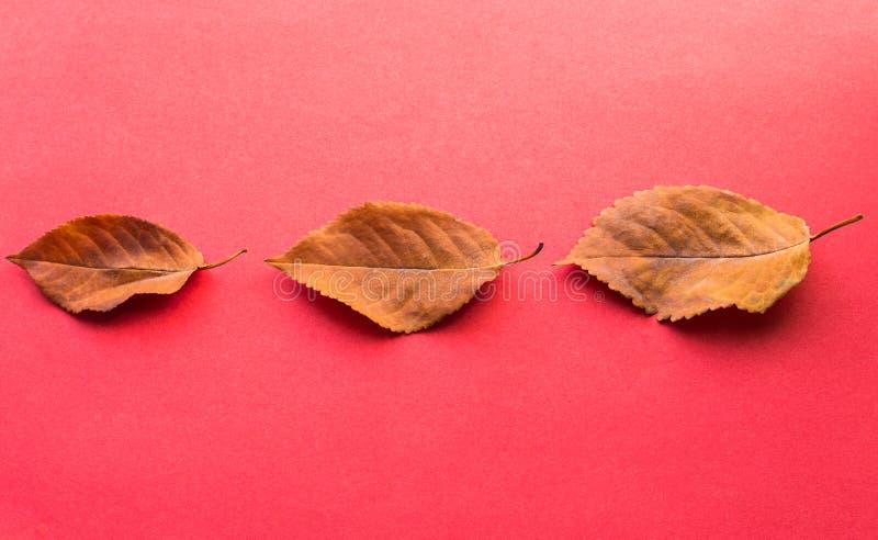 三片下落的叶子 秋天设计元素 免版税图库摄影