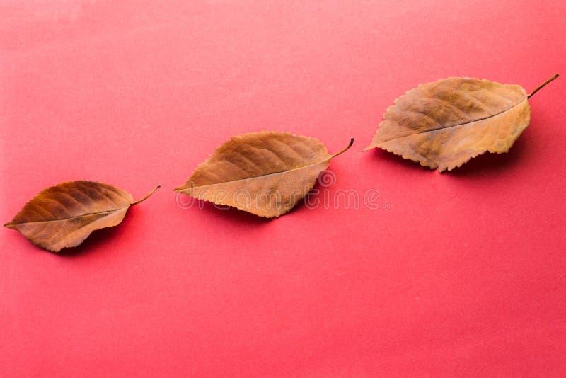 三片下落的叶子 秋天设计元素 图库摄影