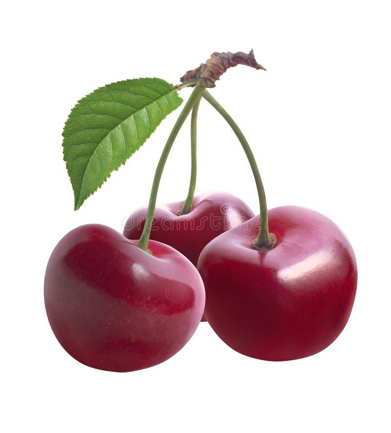 三片甜樱桃和叶子在白色背景 免版税库存照片
