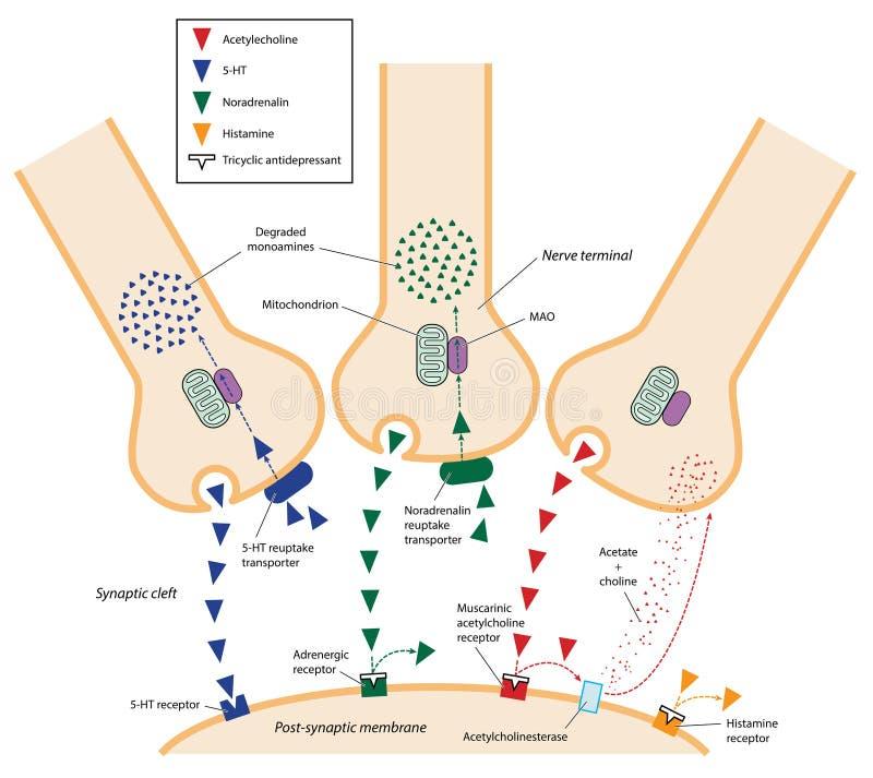 三环系列抗抑郁病药活动 向量例证