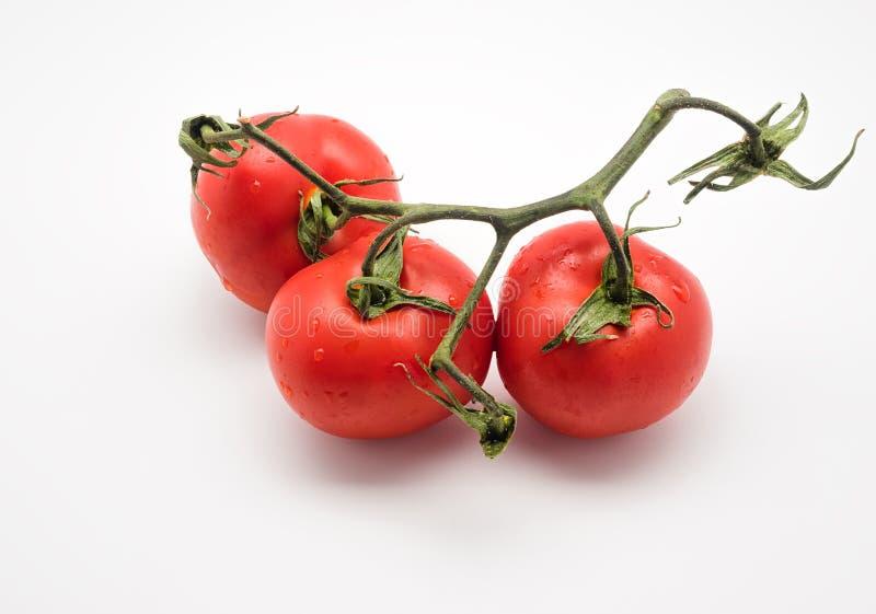 三红色和在白色隔绝的藤的新鲜的蕃茄 库存照片