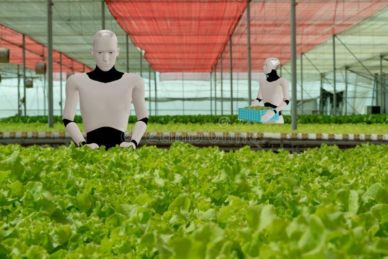 三维渲染人工智能机器人在智能农场、农业概念、机器人工作中提高生产率、效率 库存照片