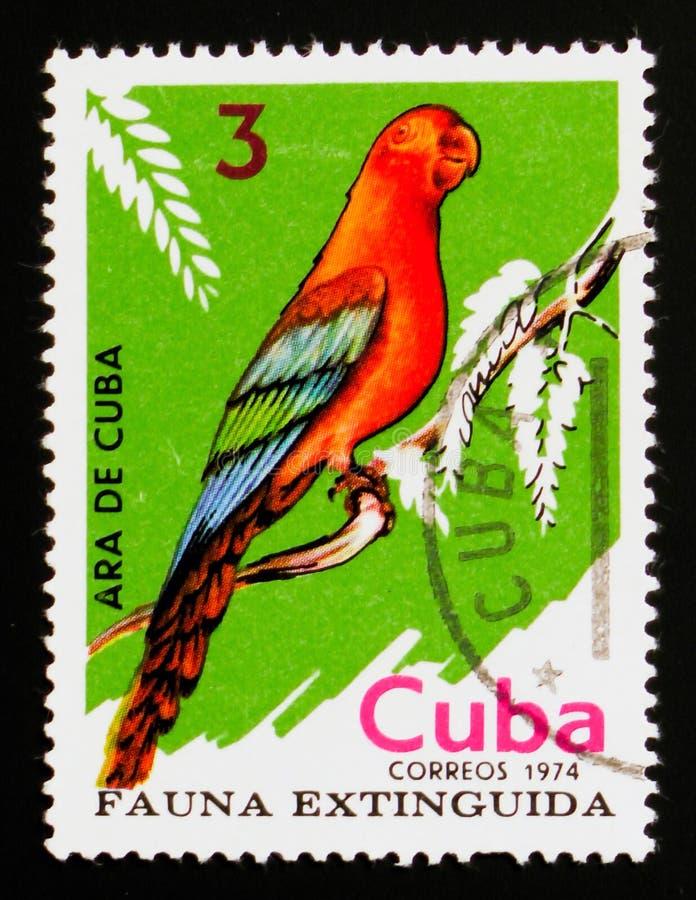 三色古巴金刚鹦鹉的Ara,绝种鸟serie,大约1974年 免版税库存图片