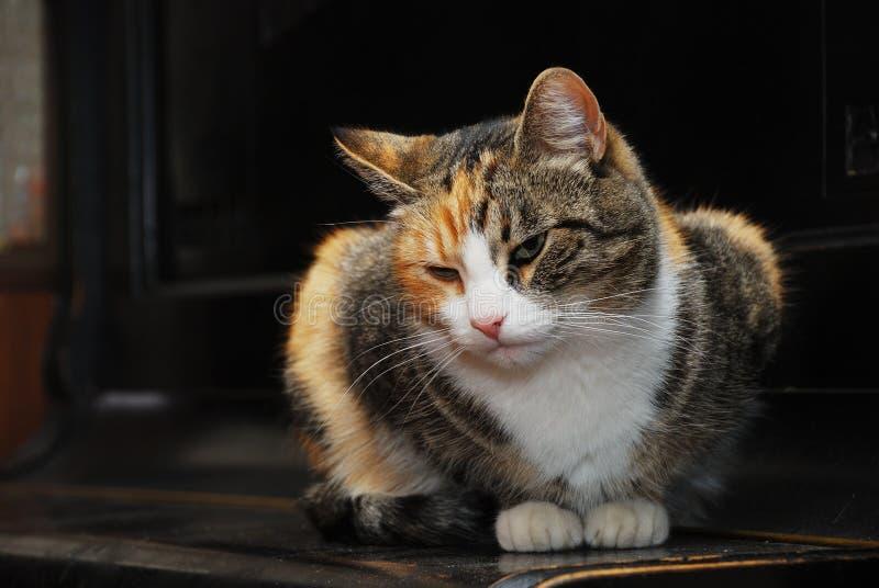 三色猫_三色猫在钢琴说谎