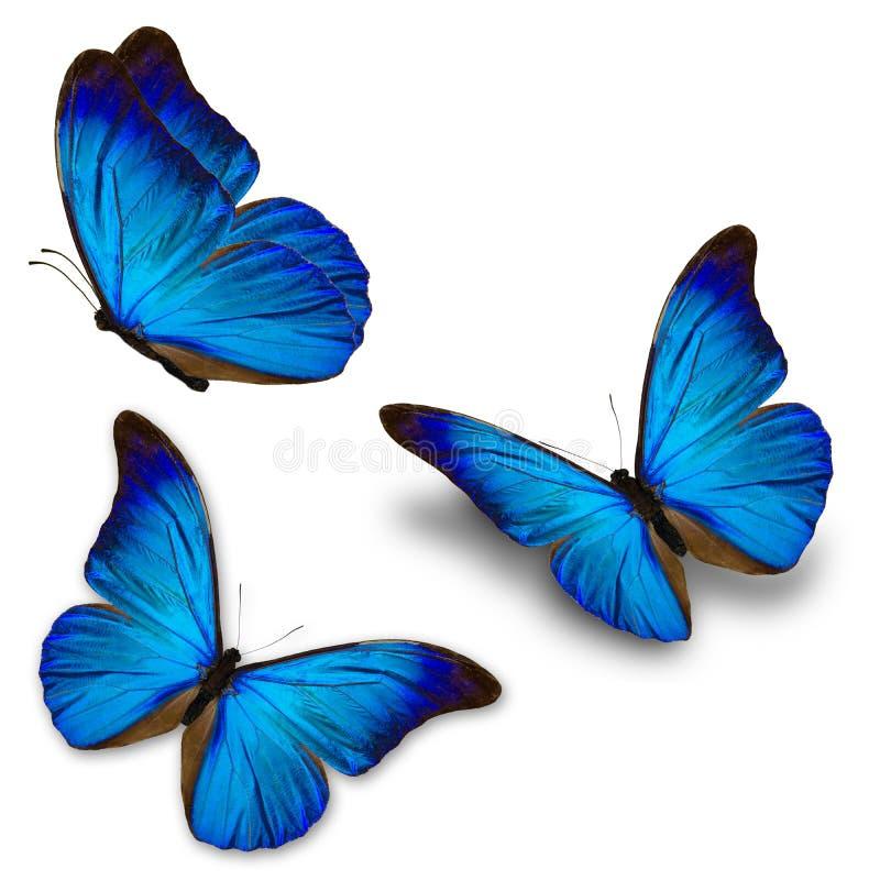 三蓝色蝴蝶 免版税库存图片