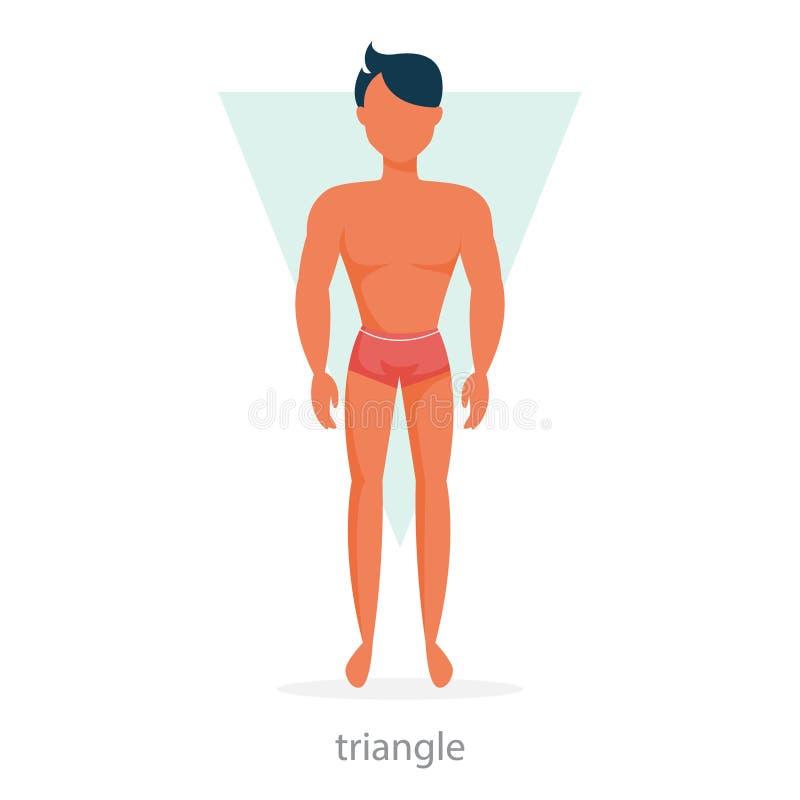 三角身材 在内衣的人身分 向量例证