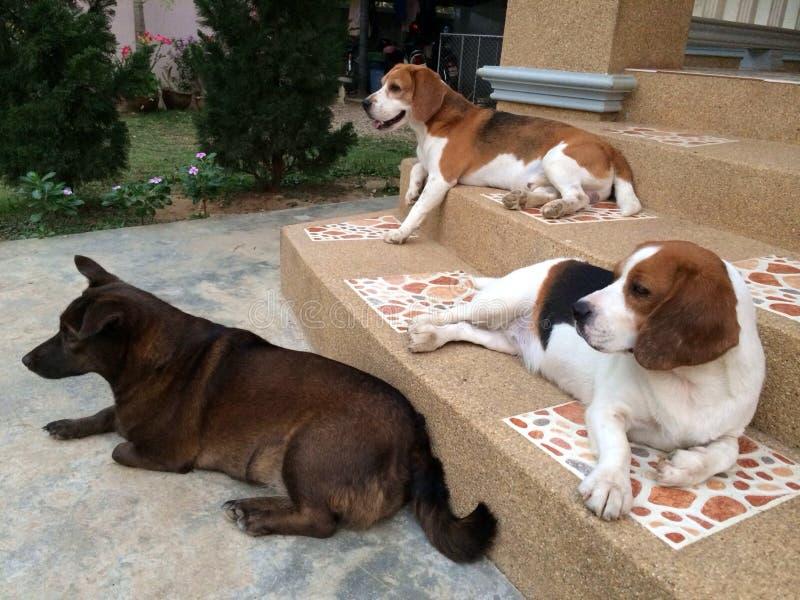 三逗人喜爱的狗 图库摄影