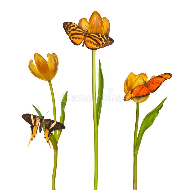 三蝴蝶和郁金香的减速火箭的被称呼的图象 免版税库存照片