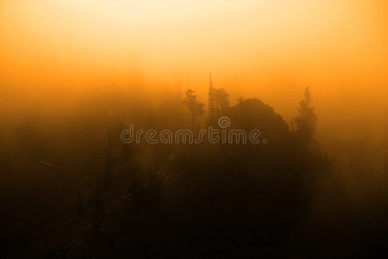 上升与树和坚固性山腰C的迷雾山脉蒸汽 免版税库存照片