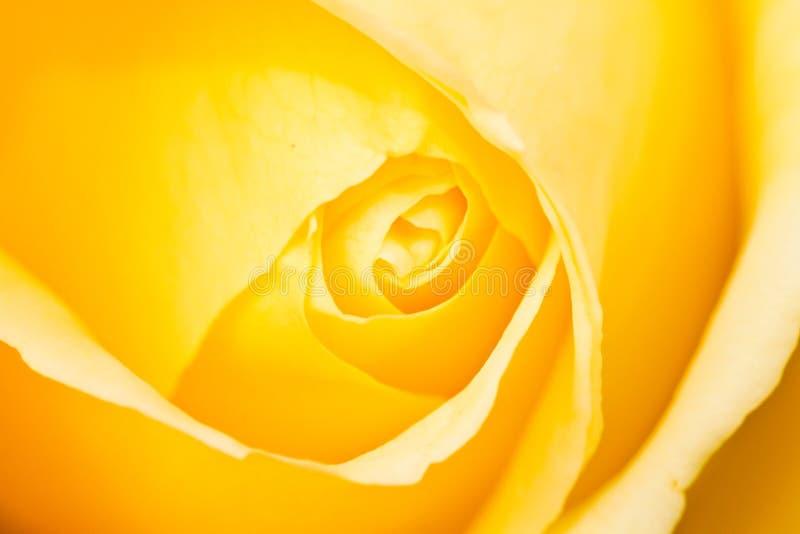 上升了黄色 免版税图库摄影