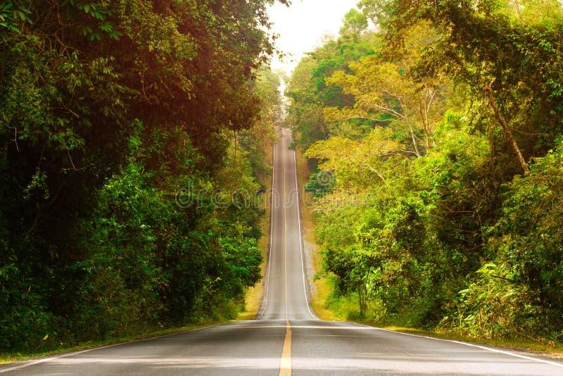 上升到天空的柏油路通过热带雨林 免版税库存照片