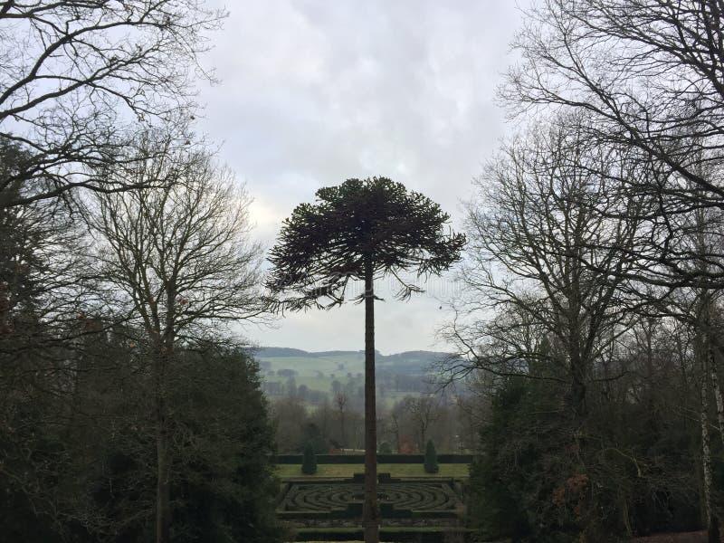 上升在一个绿色迷宫上的一棵壮观的树 免版税库存照片