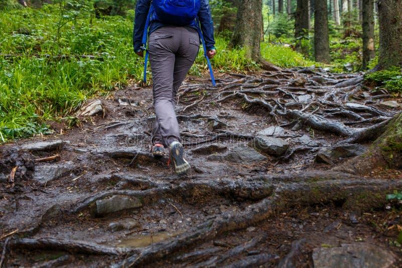 上升在与根的森林足迹的少妇 免版税图库摄影