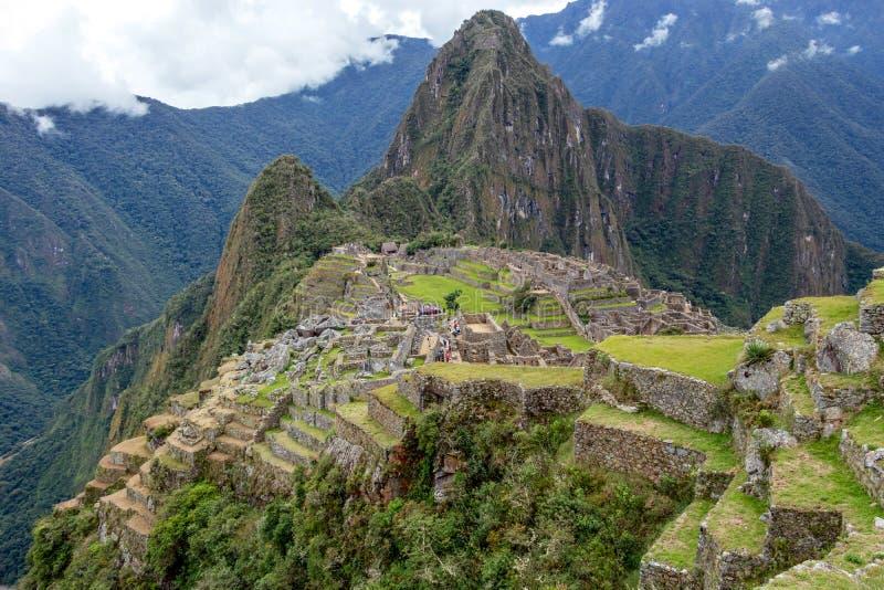 上升在厚实的下木,秘鲁外面的马丘比丘印加城堡、迷宫大阳台和墙壁被放弃的废墟  免版税库存图片