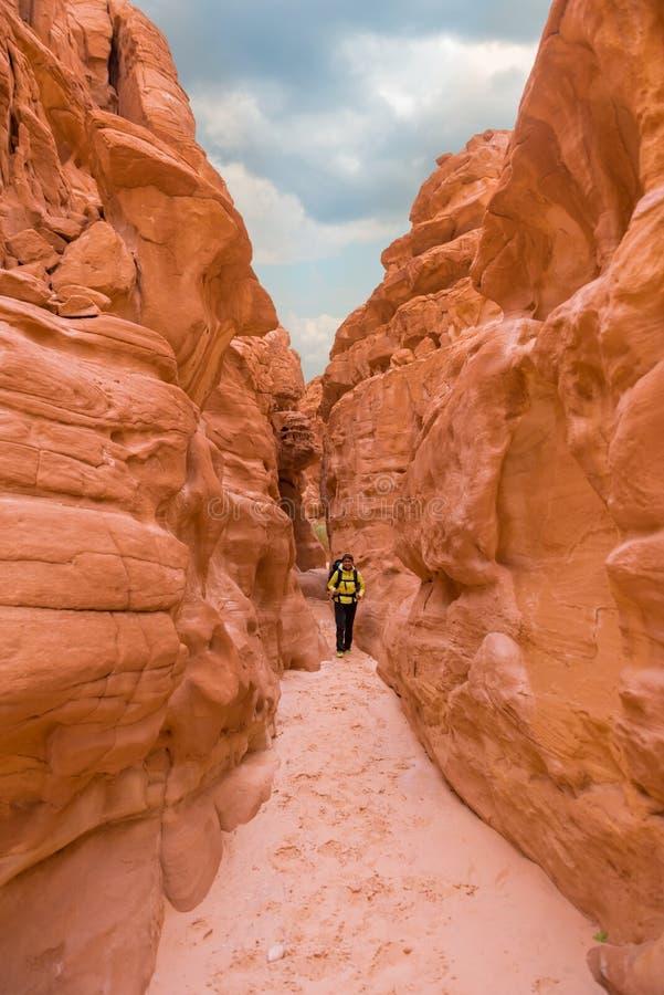 上升在峡谷,西奈,埃及的妇女 库存照片