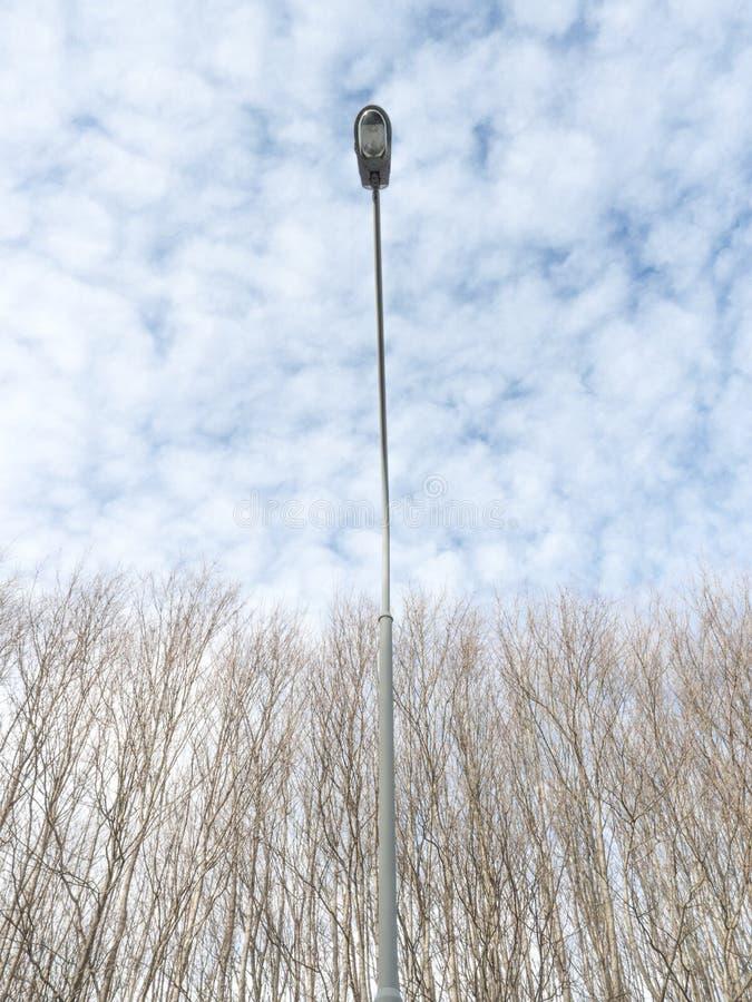 上升在树上的路灯柱 库存图片