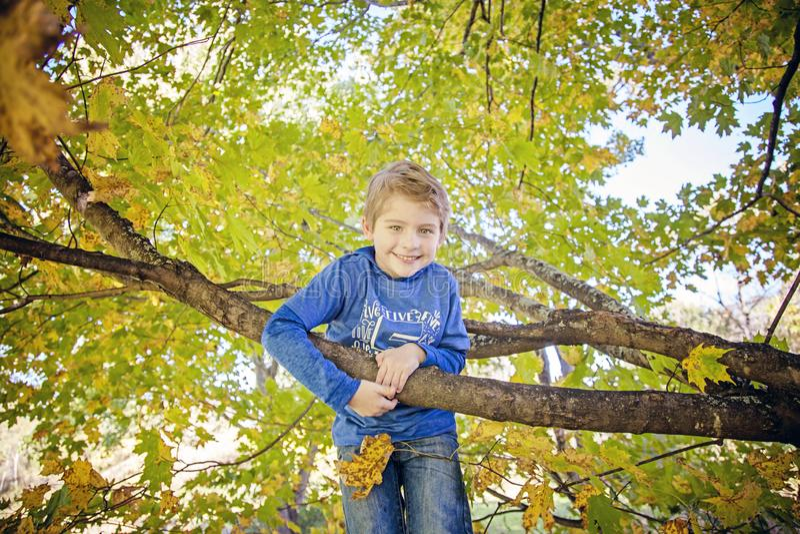 上升在树的微笑的五岁的男孩 免版税库存图片