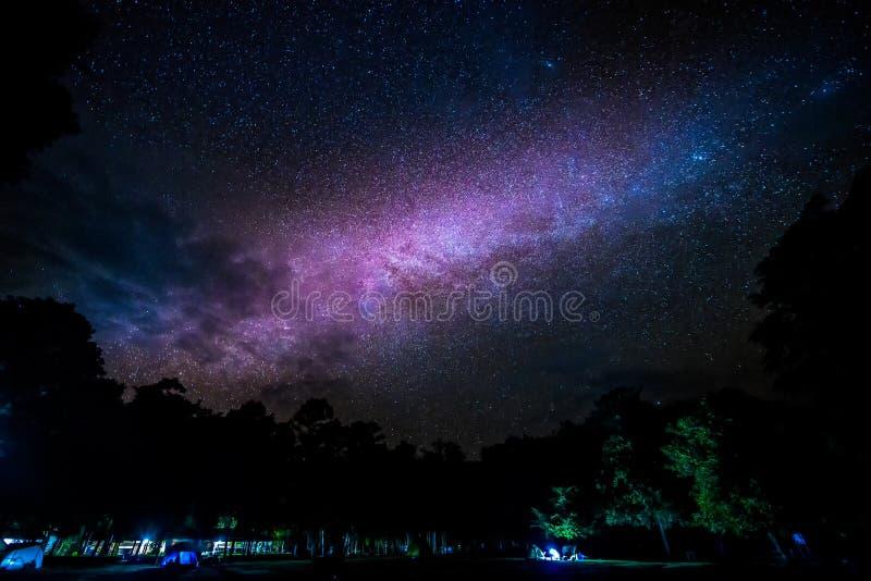 上升在树的银河星系 库存图片