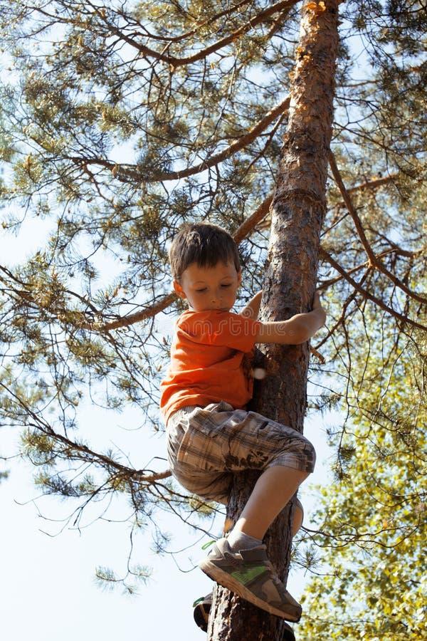 上升在树hight的小逗人喜爱的男孩 免版税库存图片