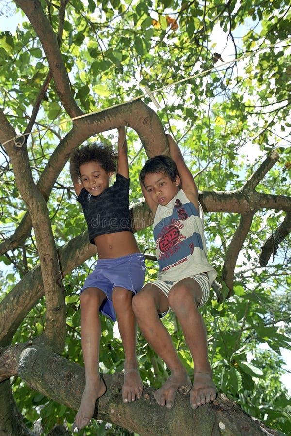 上升在热带树的巴西孩子 免版税库存图片