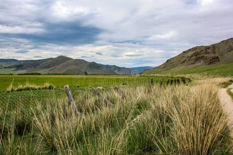 上升在高草中的干草原路 免版税库存照片